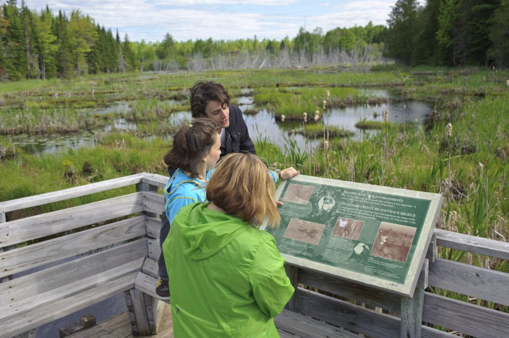Great Canadian Beaver Pond Voyage