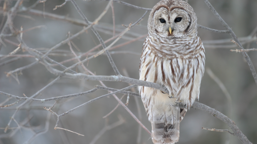 Winter Bird Safari for Kids