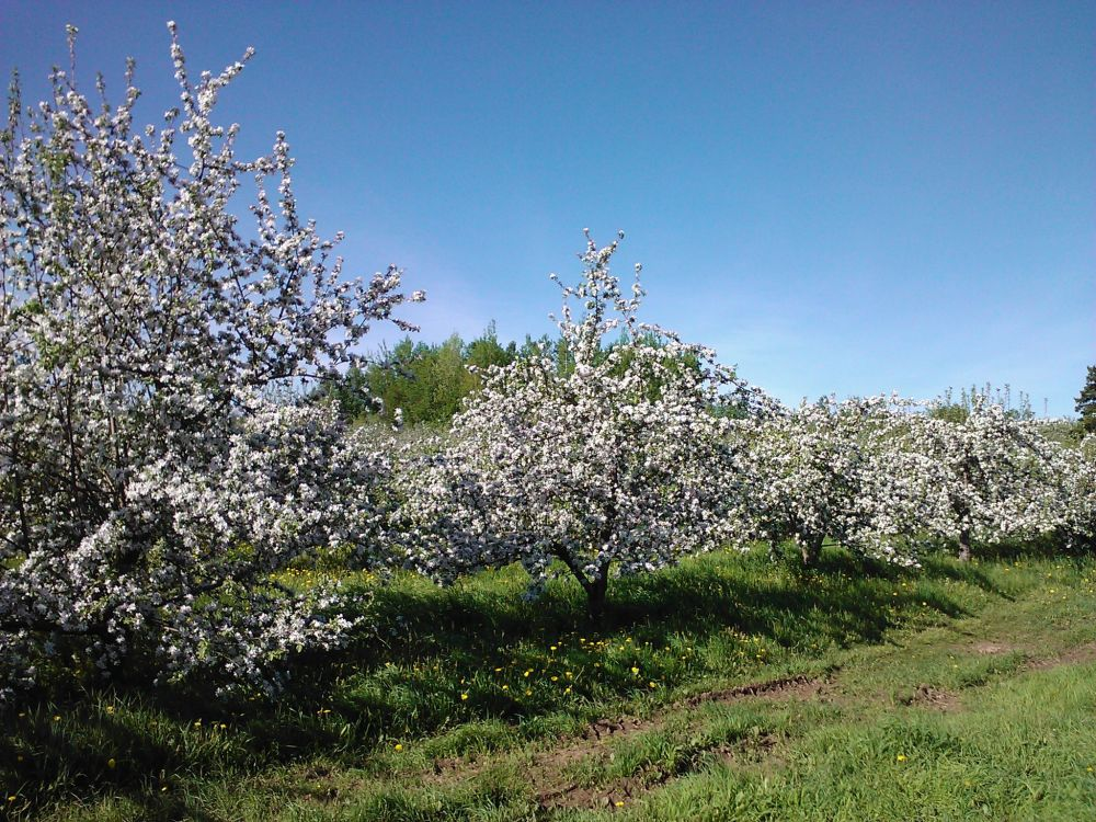 Gagetown Fruit Farm