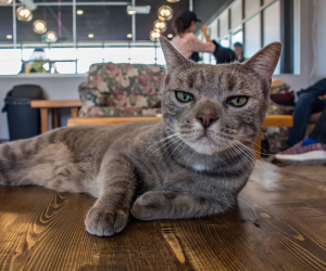 The Purrfect Cup – a cat café